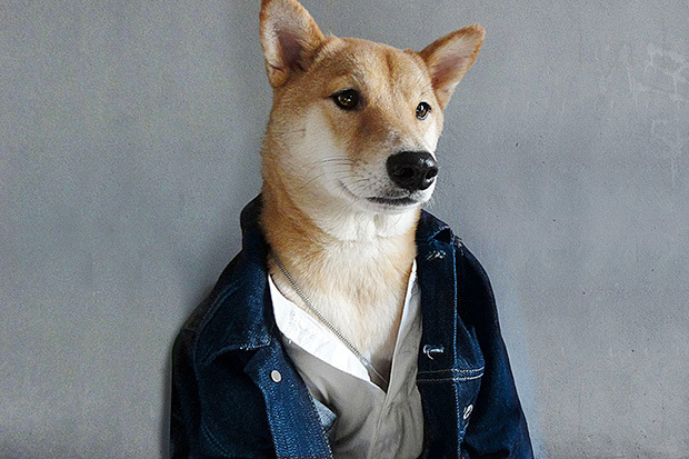 menswear-dog-is-pulling-in-15000-usd-a-month-123-Copy